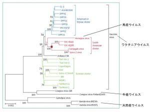 天然痘ワクチンに使われたウイルスの正体/廣川 和花(専修大学)